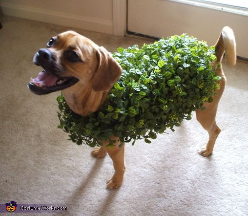 It's National Dog Day! Here's a fun Halloween DIY for your four-legged friend!