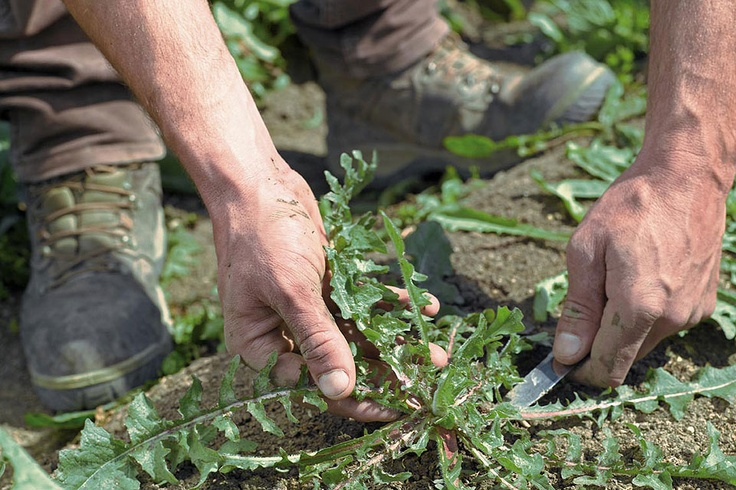 TASTE THE FOOD: il recupero delle tradizioni contadine Pugliesi di una volta con SPIRITO CONTADINO. http://www.spiritocontadino.com/