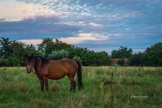 Photography...my love, my passion: Viața la țară
