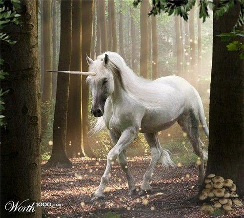 Legend Movie Unicorn | unicorn legend