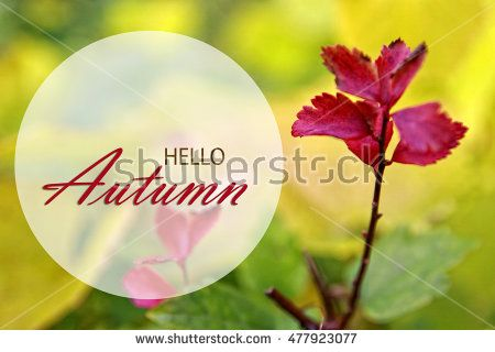 Hello Autumn wallpaper, autumn background with wonderful red fall leaves