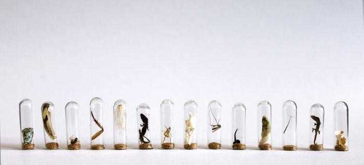 Elrie Joubert, Contemporary Curiosities: From Crane Flies to Cameos