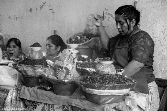 Vendedoras de chapulines en el mercado de Oaxaca / Selling grasshoppers (or crickets) in Oaxaca's market.  Oaxaca de Juárez, Oaxaca 2014.
