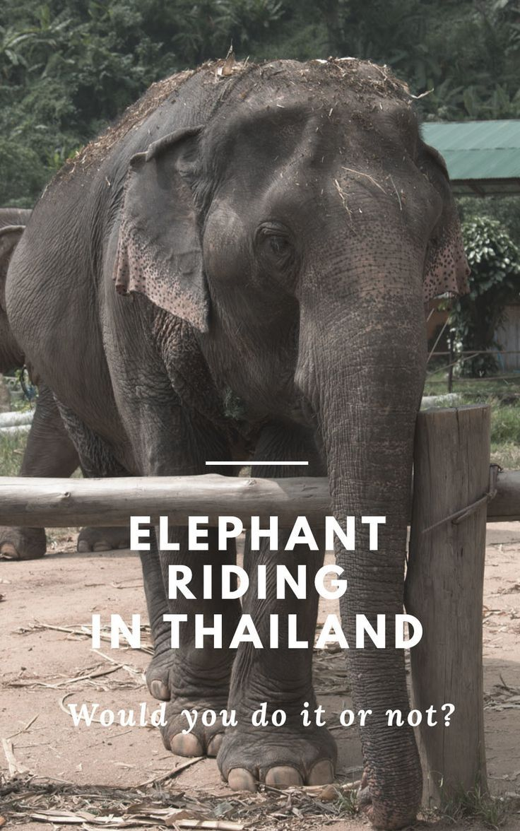 Riding an elephant is a dream to many Thailand visitors - but how are the elephants treated? Be aware and choose the right elephant camp during your visit!