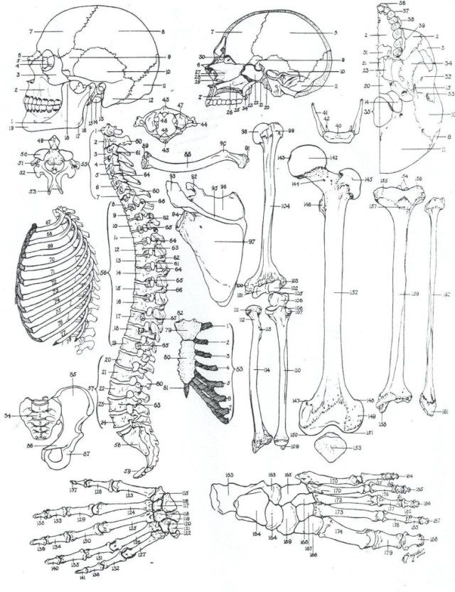 25 Amazing Picture Of Anatomy Coloring Pages Albanysinsanity Com Anatomy Coloring Book Skull Coloring Pages Coloring Books