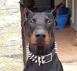 Black Leather Spiked Dog Collar - s33_1