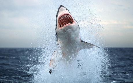 Shark Week in #Capetown