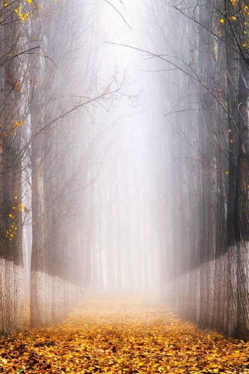 Fog and gold