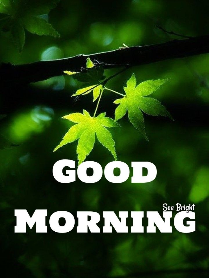 Good Morning Good Morning Quotes Sunday Morning Quotes Happy 420 Day