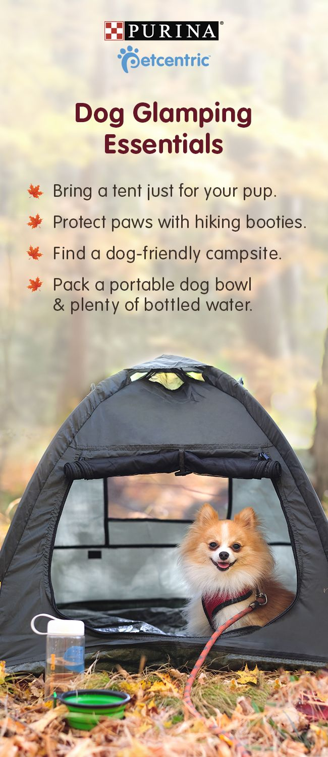 Sign up for our newsletter and get more ideas for pet-friendly fun! If you're planning a camping trip with your dog, there's plenty of ways to keep your canine comfy while you're ruff'ing it. Start by packing your pup his own tent. If you're going exploring, wear hiking booties to protect those paws. And always bring plenty of bottled water. Safe drinking water is essential for people and pets! Brought to you by Petcentric, a Purina brand and your trusted source for helpful tips & fun facts.