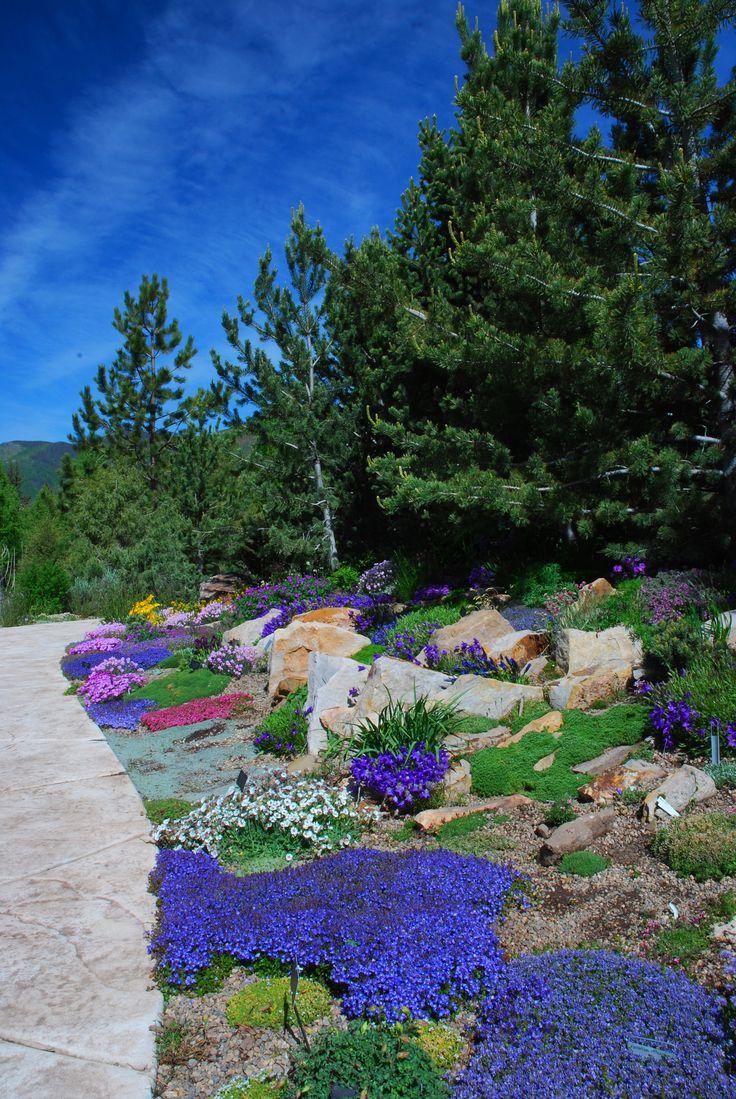 108 Best Alpine Garden Ideas Images On Pinterest