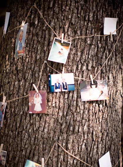photo tree: Photo Display, Photo Tree, Outdoor Parties, Photo String, Families Trees, Bridal Shower, Outdoor Events, Barns Wedding, Graduation Parties