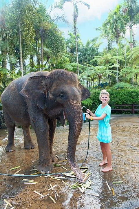 Feed, bathe, and experience the rescued elephants of the Elephant Safari Park Lodge in Ubud, Bali.