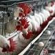 http://mexico.mycityportal.net - Gripe aviária espalha-se pelo México - Voz da Russia -                       Voz da RussiaGripe aviária espalha-se pelo MéxicoVoz da RussiaApesar das medidas sanitárias de grande escala, a epidemia da gripe aviária continua a se espalhar pelo México. Segundo as autoridades, o vírus perigoso já foi registrado em... - http://news.google.com/news/url?sa=tfd=Rusg=AFQjCNH5Pea5RgjI_Eu4hABImWQZTFBQJA