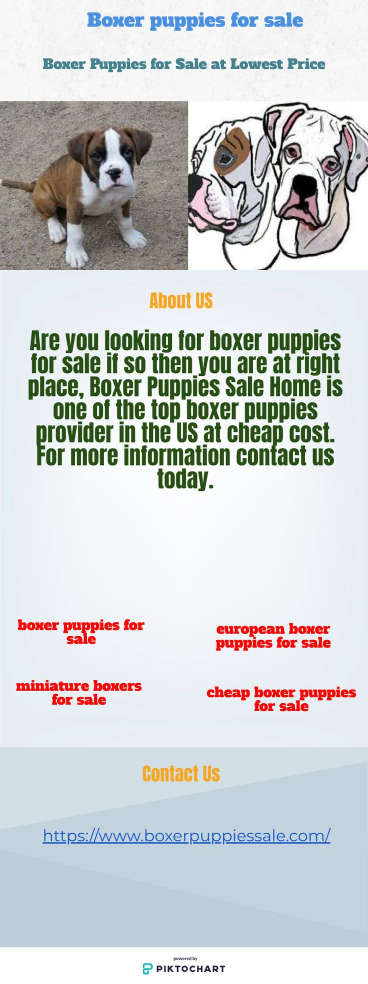 Find european boxer puppies for sale at cheap cost boxer