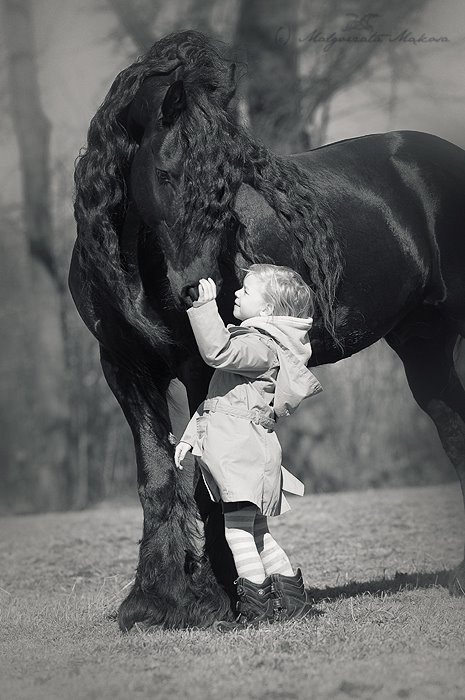 Annie needs to buy a Friesian, so we can recreate this picture. I see no flaws in this plan. -MG