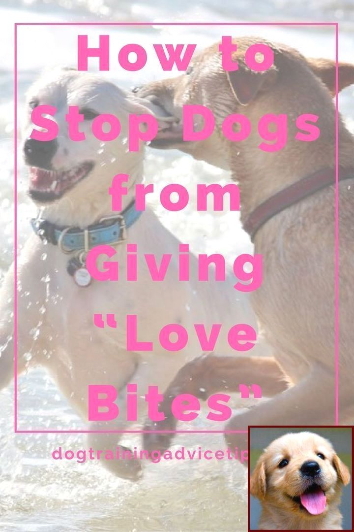1 Have Dog Behavior Problems Learn About Dog Behavior Vicious And