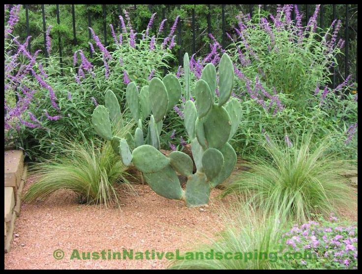 31 best images about landscaping on pinterest