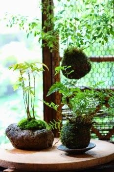 les 65 meilleures id es de la cat gorie kokedama sur pinterest planters foug res et fernasparagus. Black Bedroom Furniture Sets. Home Design Ideas