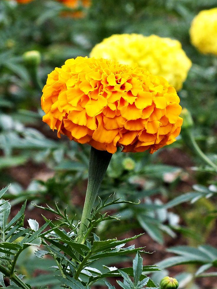 yellow :-*