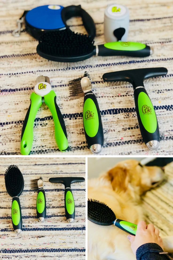 On the Blog: How To Spoil Your Pup Without Breaking The Bank | Dog Products | Grooming your pup | Pet Magasin | sponsored