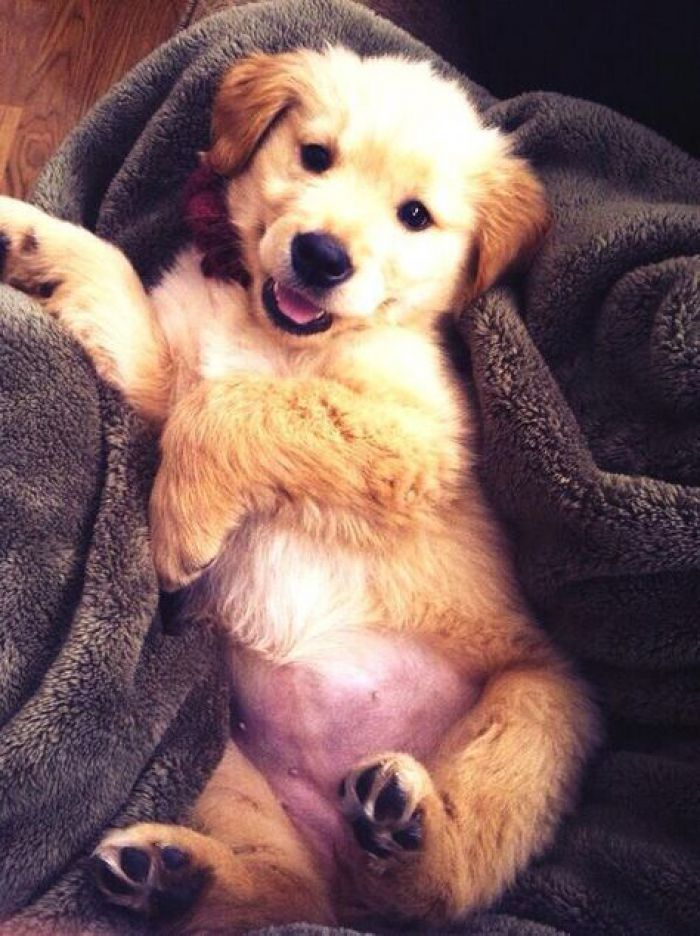 Love this happy puppy lying on robe! A cute happy puppy image we scooped on tumblr