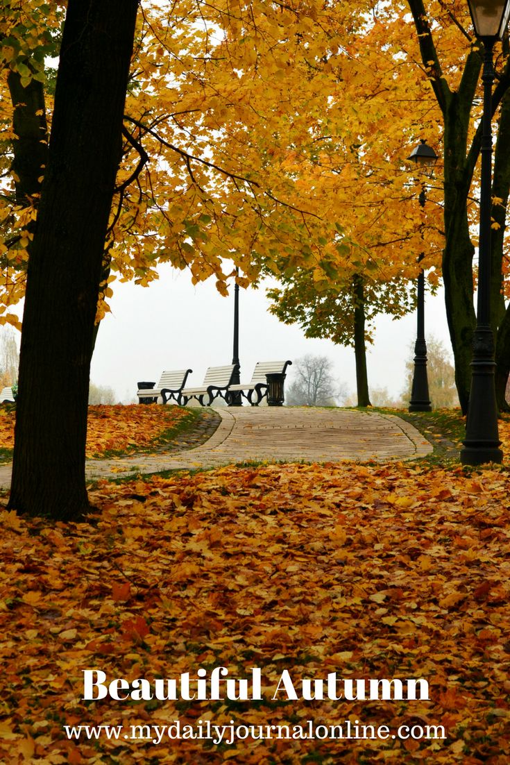 Beautiful Autumn has finally given its way to winter and it is here to stay in Calcutta, India, my home town, and this is on my winter season experiences in my hometown. #Autumn #winter #season #happiness #Festiveseason #christmas