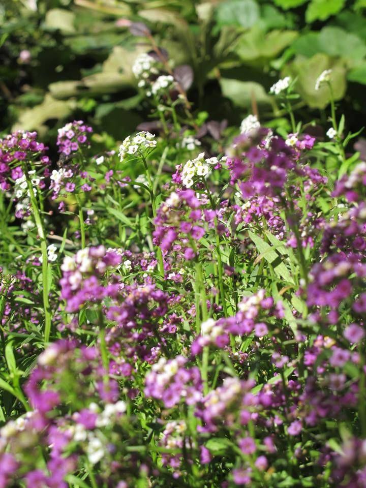 Noi non vediamo l'ora arrivi la #primavera e voi? www.verdeimpianti.it
