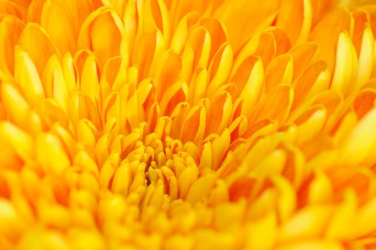 How Does the Color Yellow Make You Feel? Discover the Psychology of Color