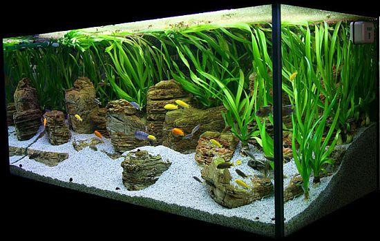 Fish Tanks Aquascaping | Malawi Lake by Oliver Knott | Blue Aquarium