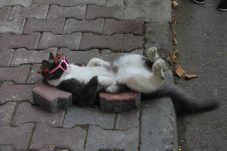 Animals Doing People Things - chingizhobbes:   my friends found this sleeping...