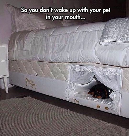 This Or Train Your Dog Properly�