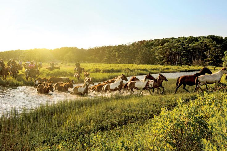 """Assateague Island - The South's Best Beaches - Southernliving. Maryland  This island draws nature lovers with beaches, birding, campgrounds, and bands of wild ponies. Connie Yingling of the Maryland Office of Tourism Development recalls the time when a docile pony somehow managed to sniff out leftover steamed crab from her campsite. """"With seagulls, wild horses, and other roaming wildlife, you're bound to have some scavenging,"""" she says, adding that even though she and her husband always…"""