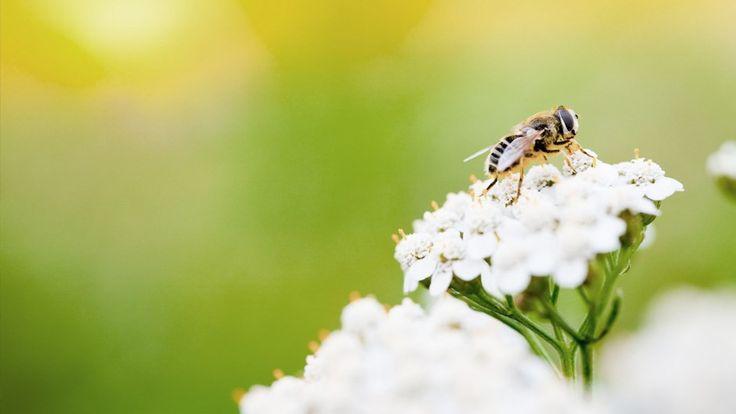 Bier, brandmænd og myg: Din guide til stik og bid