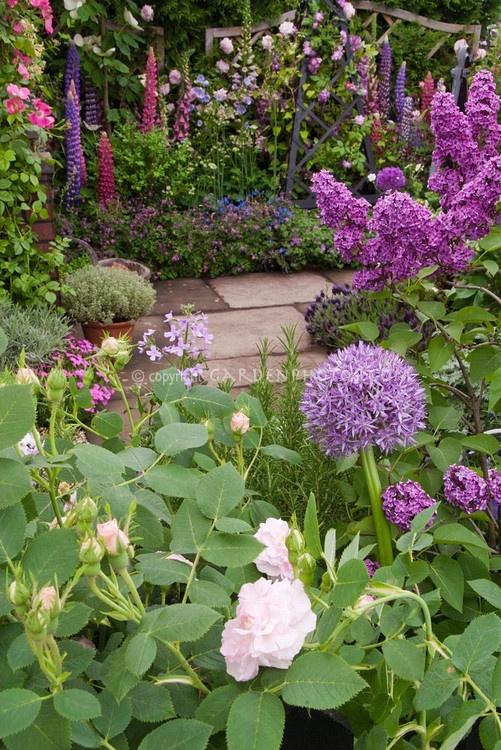 Best 25 Allium Flowers Ideas On Pinterest Allium