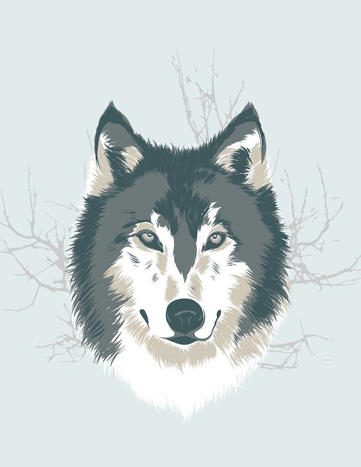 Wolf illustration. This is the first piece I made on the iPad using Adobe Ideas…