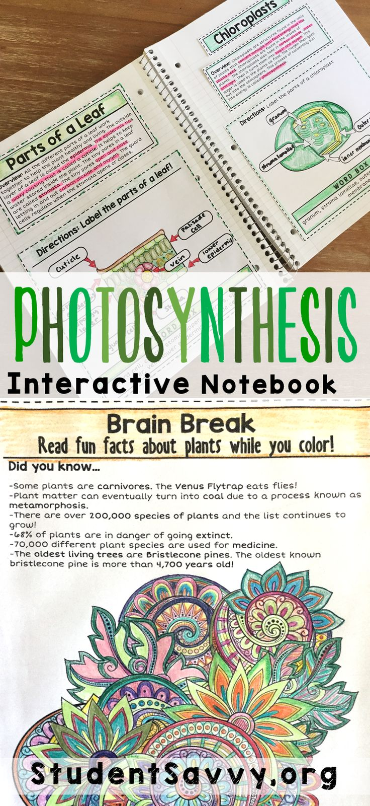 My students love these foldables and activities! Photosynthesis unit for Earth Science
