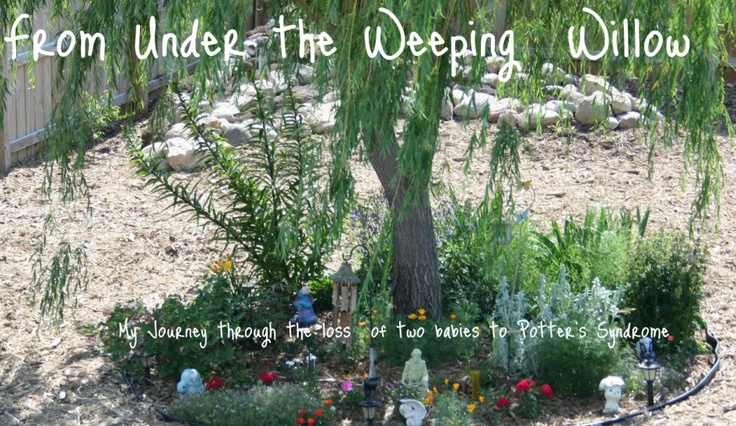 Under the weeping willowWeeping Willow, Blog