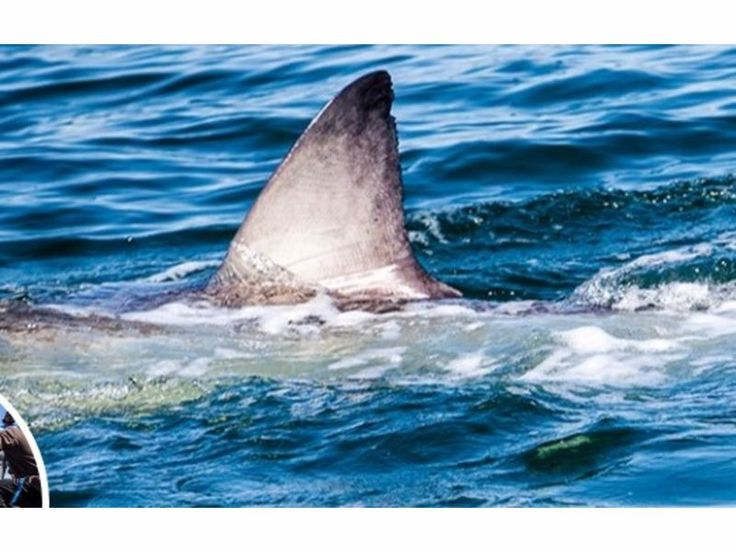 New Great White Shark Spotted Off Jersey Shore