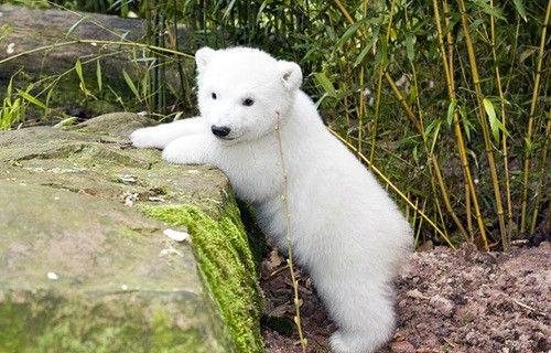 Baby Polar Bear!White Animal, Animal Pictures, Baby Animal, Baby Polar Bears, Bear Cubs, Baby Bears, Beautiful Creatures, Polar Bears Cubs, Adorable Animal