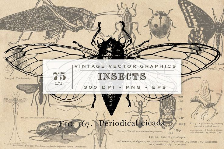 These antique insect graphics were sourced from an antique educational entomology book, owned in house, and published in 1912. There are more than 75 vintage images of insects of almost every kind: an