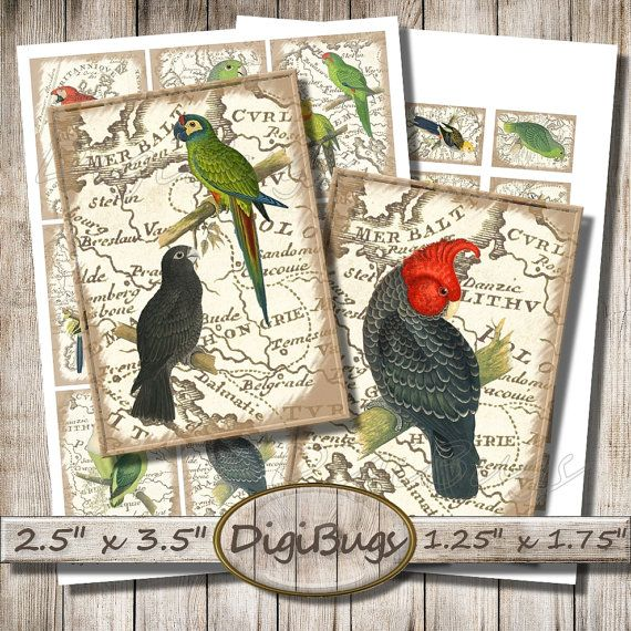 Parrots on Vintage Map, Digital Collage Sheet, Parrot Aceo Cards, Gift tags, Mini Labels, Printable Parrot Images, Instant Download a2