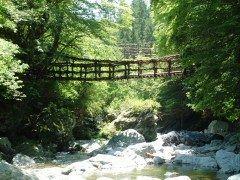 徳島県三好市にある奥祖谷二重かずら橋  東祖谷にあり約800年前に平家一族が馬場の訓練に通うために架けたと言われています シラクチカズラという蔓を使って二本の吊り橋が並んで架けられており男橋女橋とも夫婦橋とも呼ばれています  また野猿と呼ばれる自分でロープを引っ張って進む人力ロープウェイもあります 野性的なスリルが味わえる場所ですよ  tags[徳島県]