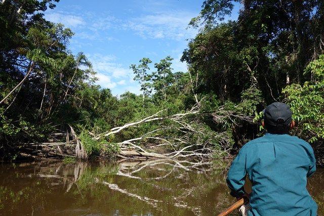 Pérou-Réserve Pacaya Samiria La réserve est la plus grande zone protégée du Pérou avec une superficie de 20 800km2. Et surtout elle abriterai pas moins de 40 000 âmes ! Pour plus d'informations: http://www.yoytourdumonde.fr/voyage-perou-reserve-pacaya-samiria/