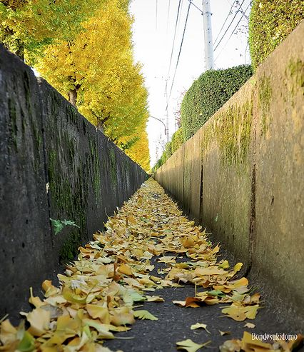 Amazing Vanishing Point Photography