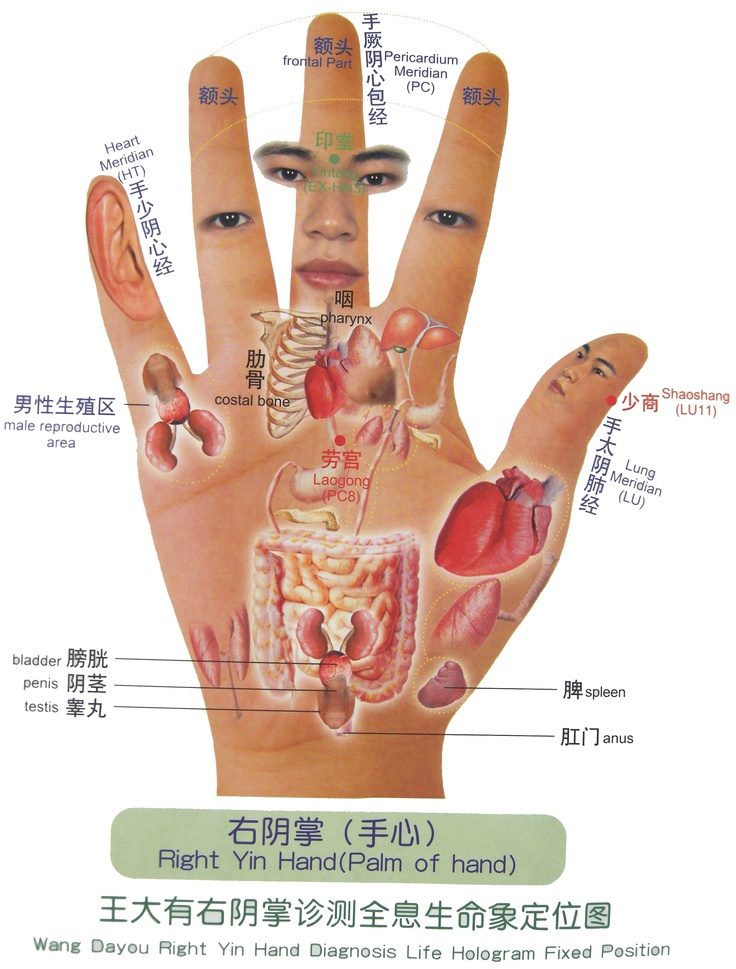 TCM Diagnosis - the body reflected in the hand