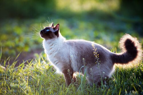 Datos curiosos sobre gatos.