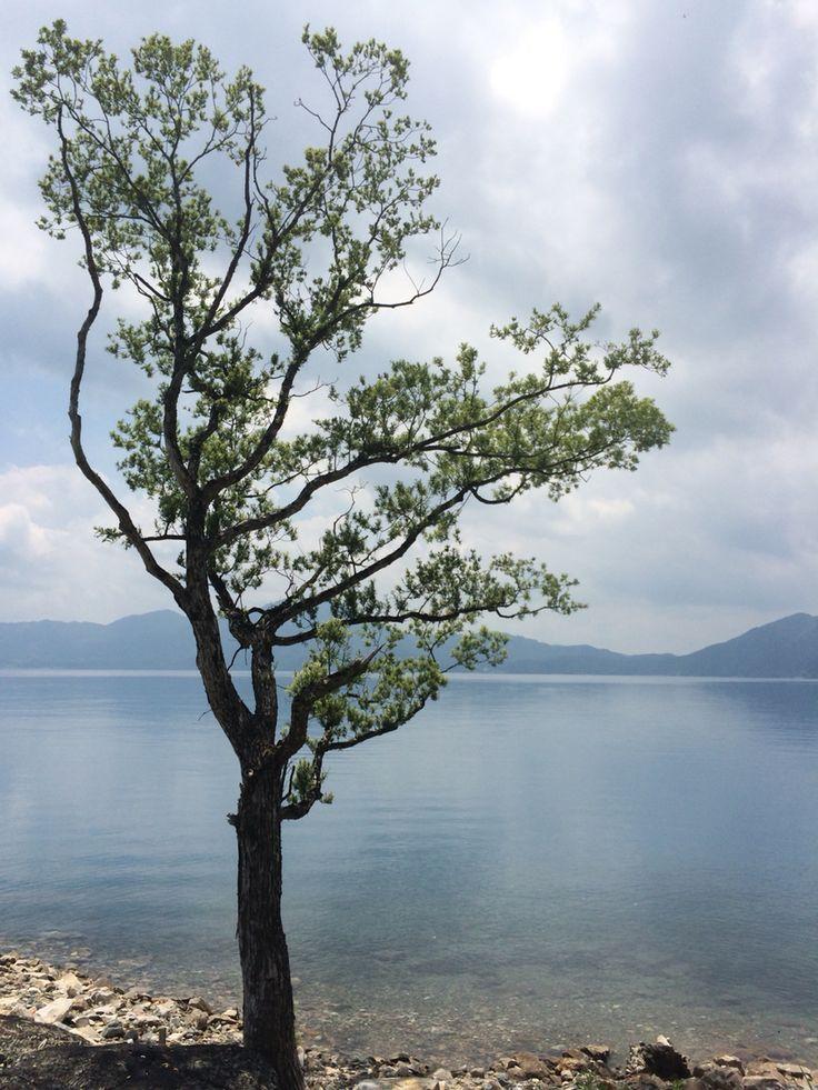 Lone tree @ Lake Tazawa