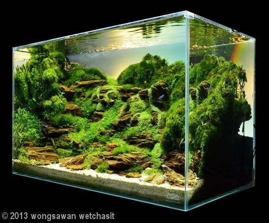 10 images about fish tanks on pinterest saltwater fish for Aquarium waterfall decoration