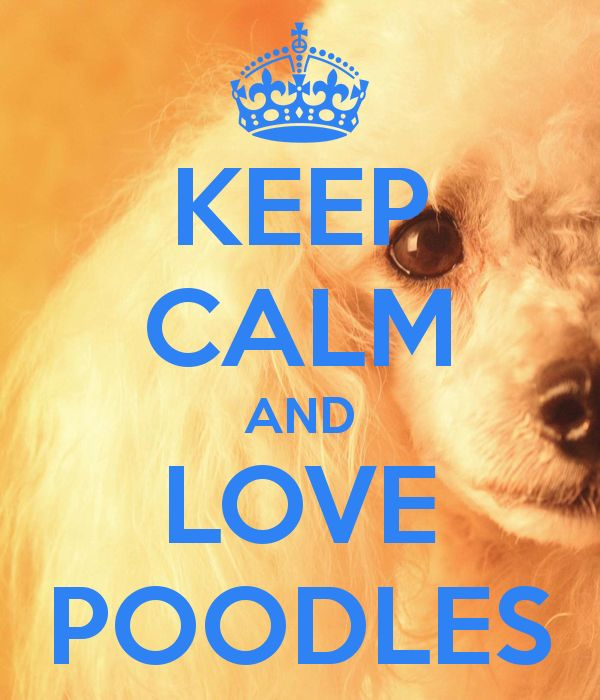 KEEP CALM AND LOVE POODLES - KEEP CALM AND CARRY ON Image Generator - brought to you by the Ministry of Information
